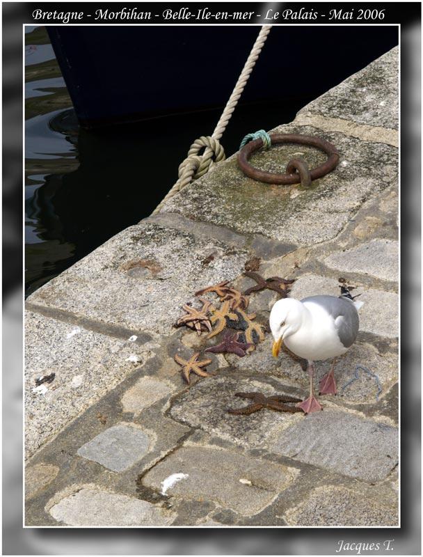 Bretagne-Morbihan-Belle-ile-en-mer-(6)