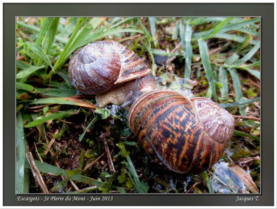 Monde Animal Mollusques Escargots