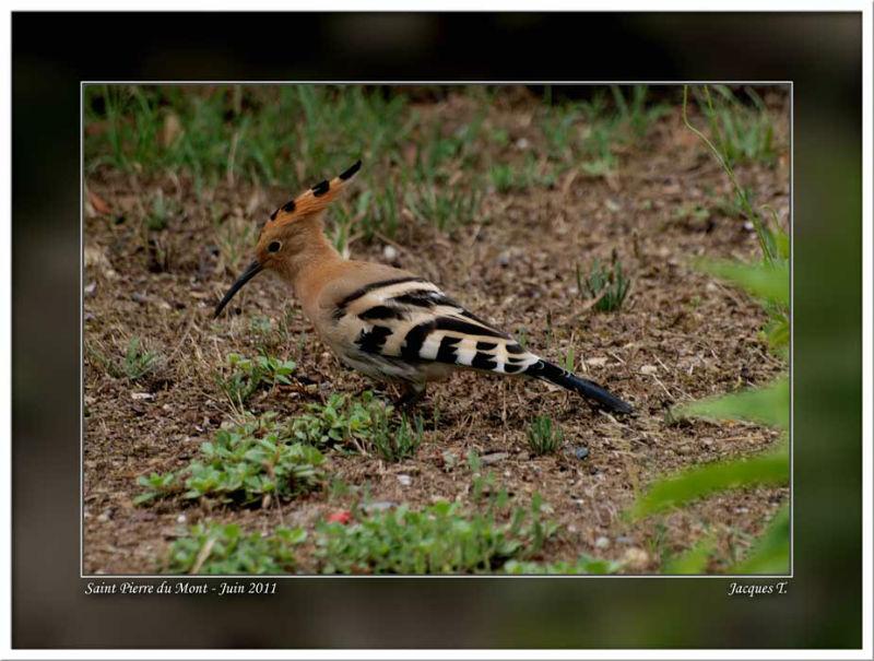 images d'oiseaux bucérotiformes du monde animal