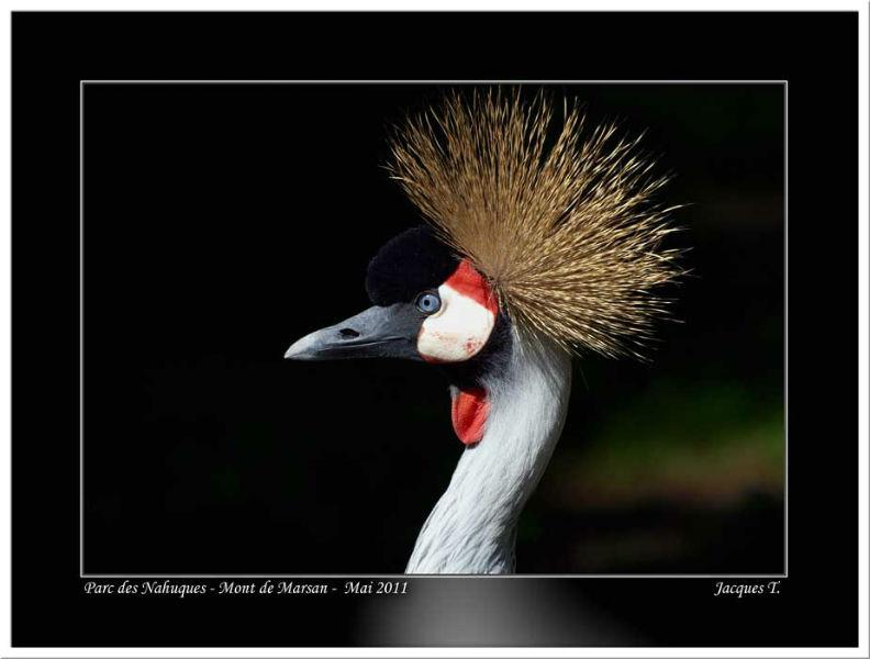images d'oiseaux gruiformes du monde animal