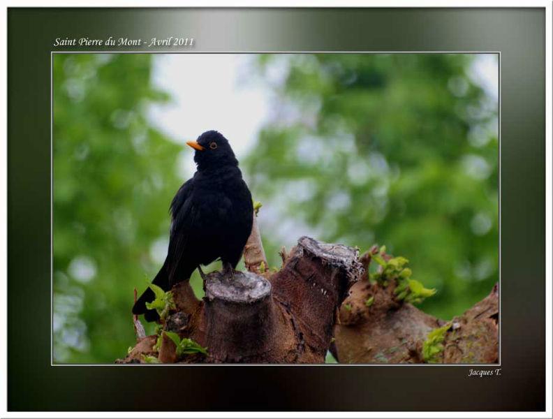 images d'oiseaux passériformes du monde animal