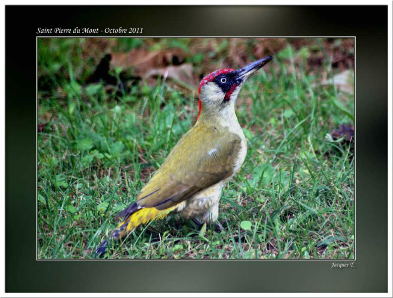 images d'oiseaux piciformes du monde animal