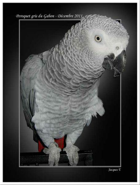 images d'oiseaux psittaciformes du monde animal