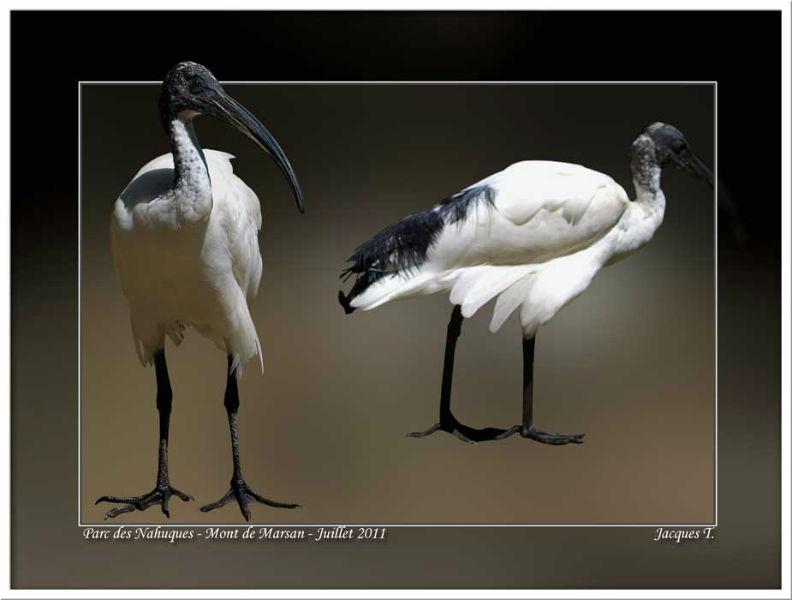 images d'oiseaux pélécaniformes du monde animal